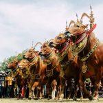 Translate Bahasa Madura ke Indonesia